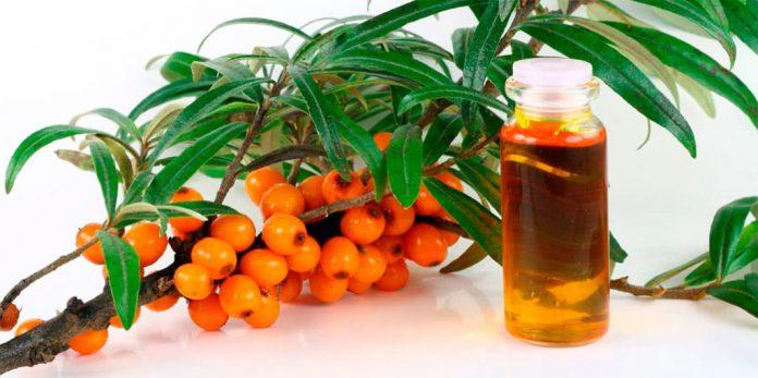 oblepiha 1024x511 1 696x347 - Облепиховое масло от молочницы — эффективные рецепты при лечении кандидоза