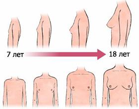 Половое созревание девочек – что, когда и как?