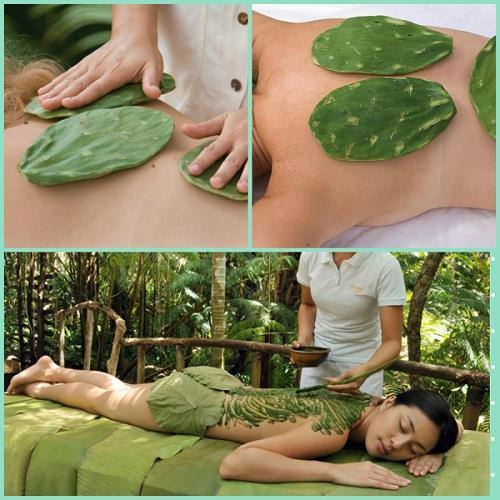 Необычные спа-процедуры_экзотический массаж кактусами