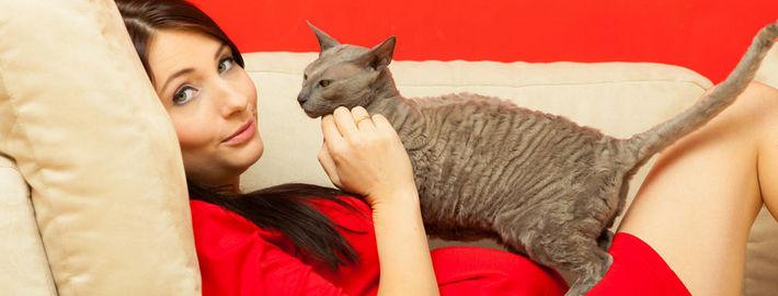 беременная и кошка